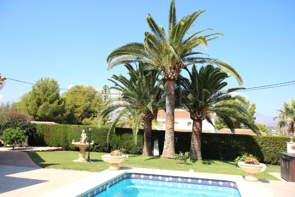 Extra nice palm trees