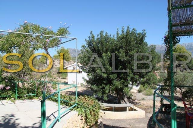 Garden with olivetree