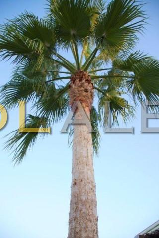 The nice and healthy palm tree