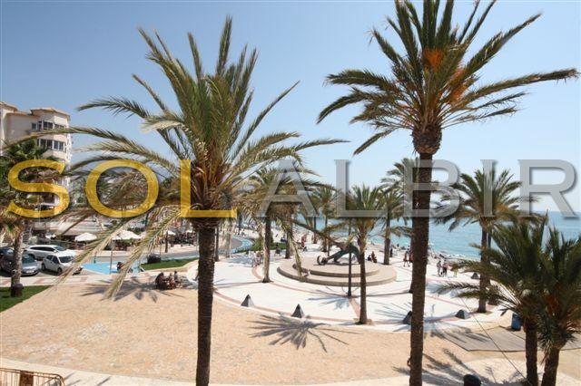 The nice palms around the beach area