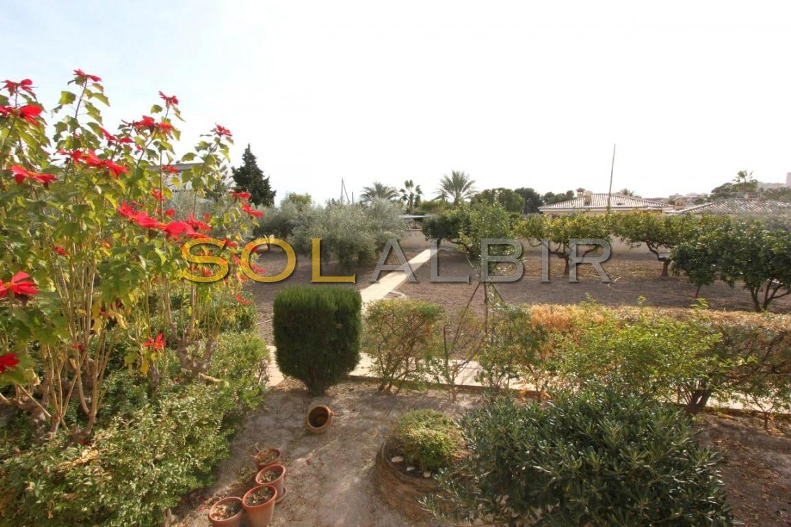 Plot with fruit trees and olives trees