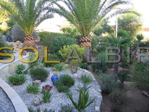 Garden with palms trees